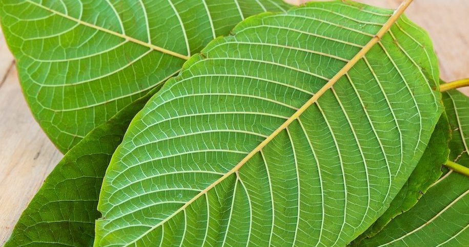 Is Kratom Legal? Side Effects, Addiction Potential, and Treatment